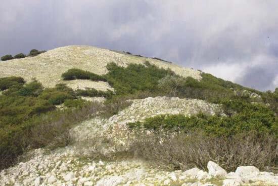 Bosco di Pomieri madonie